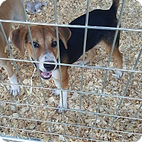 Adopt A Pet :: Mindy - Livingston Parish, LA