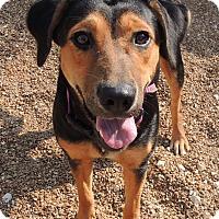 Adopt A Pet :: Gemma - House Springs, MO