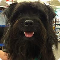 Adopt A Pet :: Onyx - Orlando, FL