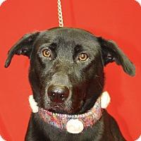 Adopt A Pet :: Kingston - Jackson, MI