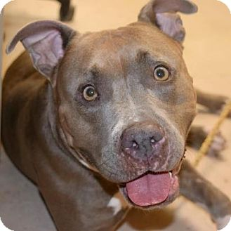 American Pit Bull Terrier Mix Dog for adoption in Austin, Texas - Simone