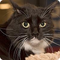 Adopt A Pet :: Shadow - San Juan Capistrano, CA