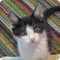 Adopt A Pet :: Quill - Fort Collins, CO