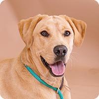 Adopt A Pet :: Honey - Sudbury, MA