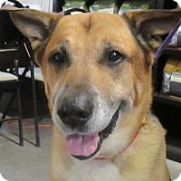Adopt A Pet :: Wes - Lloydminster, AB
