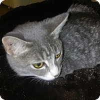 Adopt A Pet :: Nutmeg - Alexis, NC
