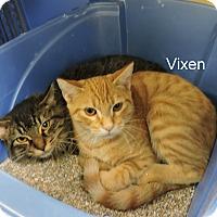 Adopt A Pet :: Vixen - Slidell, LA