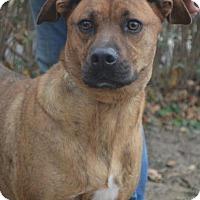 Adopt A Pet :: Tigger - Danbury, CT