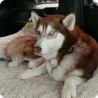 Adopt A Pet :: Meeka - Matawan, NJ
