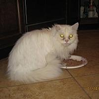 Adopt A Pet :: Royal Majesty - Glendale, AZ