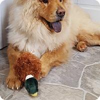 Adopt A Pet :: Apollo - Fennville, MI