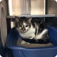 Adopt A Pet :: Panini - Janesville, WI