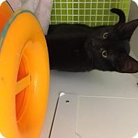 Adopt A Pet :: Hampton - San Antonio, TX