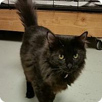Adopt A Pet :: Mandy Abby - Diamond Springs, CA