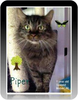 Domestic Longhair Cat for adoption in Mobile, Alabama - Piper
