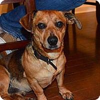 Adopt A Pet :: Sam - Raleigh, NC