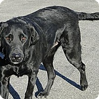 Adopt A Pet :: Boston - Columbus, IN