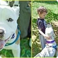 Adopt A Pet :: Lulu - Shavertown, PA