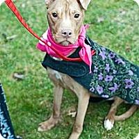 Adopt A Pet :: Pheobe - WARREN, OH