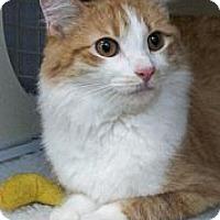 Adopt A Pet :: Rory - Chandler, AZ