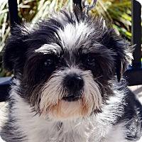 Adopt A Pet :: Dugan - Bridgeton, MO