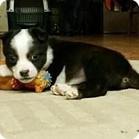Adopt A Pet :: Mira - Saskatoon, SK