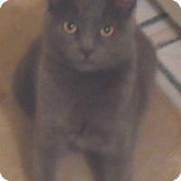Adopt A Pet :: Mookie - Pensacola, FL