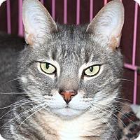 Adopt A Pet :: Pumba - North Branford, CT