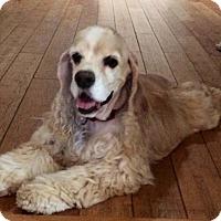 Adopt A Pet :: Motek - Scottsdale, AZ