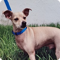 Adopt A Pet :: Bailey - Palmetto Bay, FL