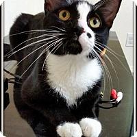 Adopt A Pet :: Andy - St. Louis, MO