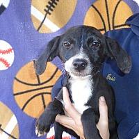 Adopt A Pet :: Oscar - Oviedo, FL