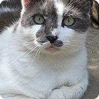 Adopt A Pet :: Darwin - Bonita Springs, FL