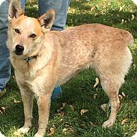 Adopt A Pet :: Honey - Texico, IL