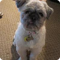 Adopt A Pet :: Bogey - Wichita, KS