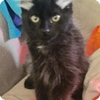 Adopt A Pet :: Meeko - North Highlands, CA