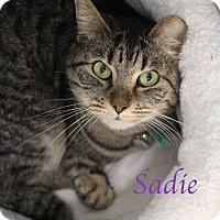 Adopt A Pet :: Sadie - Bradenton, FL