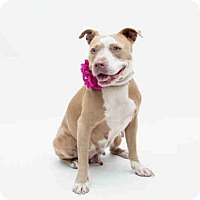 Adopt A Pet :: LADY - Orlando, FL