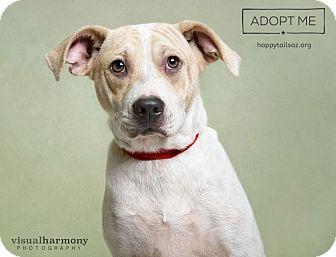 Hound (Unknown Type)/Cattle Dog Mix Dog for adoption in Chandler, Arizona - Dante