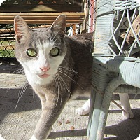 Adopt A Pet :: Bill - Kingston, WA