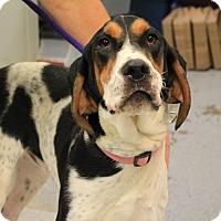 Adopt A Pet :: Sir Sherman - Martinsville, IN