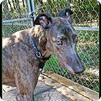 Adopt A Pet :: Joey - Geneva, OH