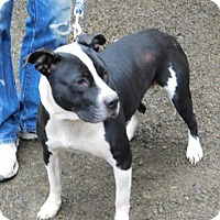 Adopt A Pet :: INNOKO - Millerstown, PA