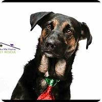 Adopt A Pet :: Brinkley - Richardson, TX