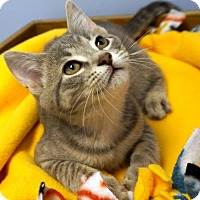 Adopt A Pet :: Dizzy - Verona, WI