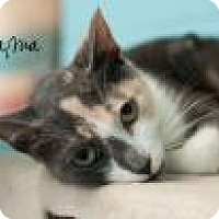 Domestic Mediumhair Cat for adoption in Middleburg, Florida - Mama