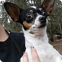 Adopt A Pet :: Merry - Gainesville, FL
