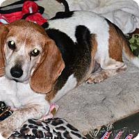 Adopt A Pet :: BB - Melrose, FL