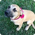 Adopt A Pet :: Josey