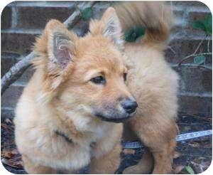 Myla | Adopted Dog | K...